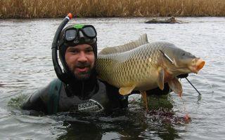 Подводная охота для начинающих — первые шаги подвоха