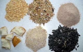 Прикормка для плотвы: рецепты для ловли летом и зимой, весной и осенью