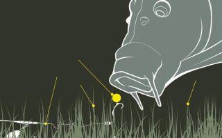 Ловля карпа на бойлы — 5 рецептов и руководство по правильной оснастке удилища