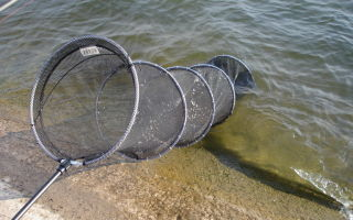 Правильный выбор садка для ловли рыбы