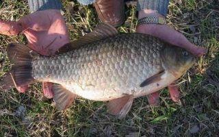 Рыбалка на карася поплавочной удочкой