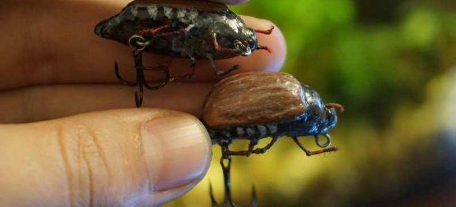 Обзор воблера «Майский жук» на голавля