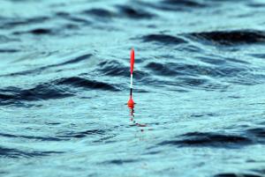 В поплавочной удочке сигнализатором является поплавок.