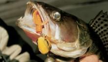 Ловля судака на джиг: оранжевые, желтые приманки очень нравятся судаку