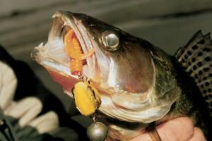 Ловля судака на джиг: оранжевые и желтые приманки очень нравятся судаку