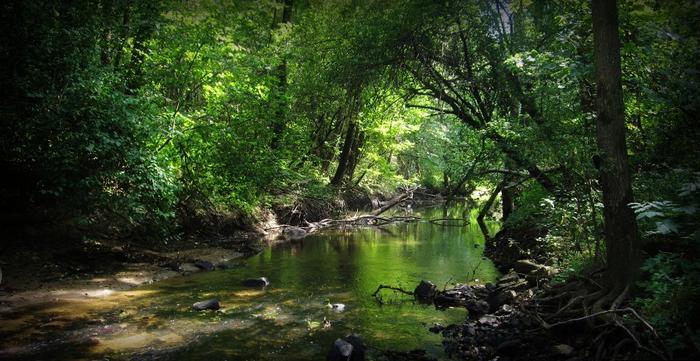 Заросшая деревьями и кустарником река