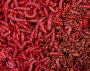 Опарыш окрашен в красный цвет