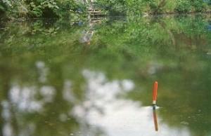 Поплавок для ловли плотвы
