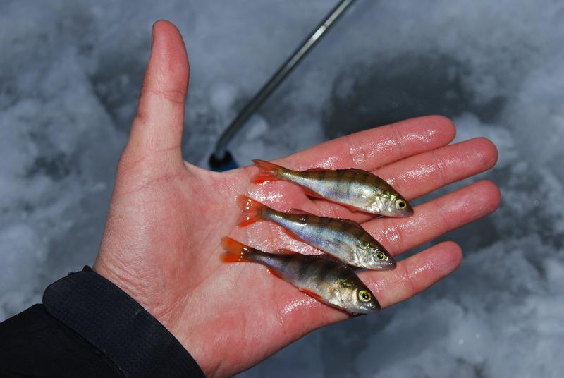Особенности зимней рыбалки на щуку жерлицами