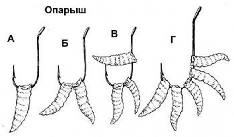 Правила и особенности насаживания червей