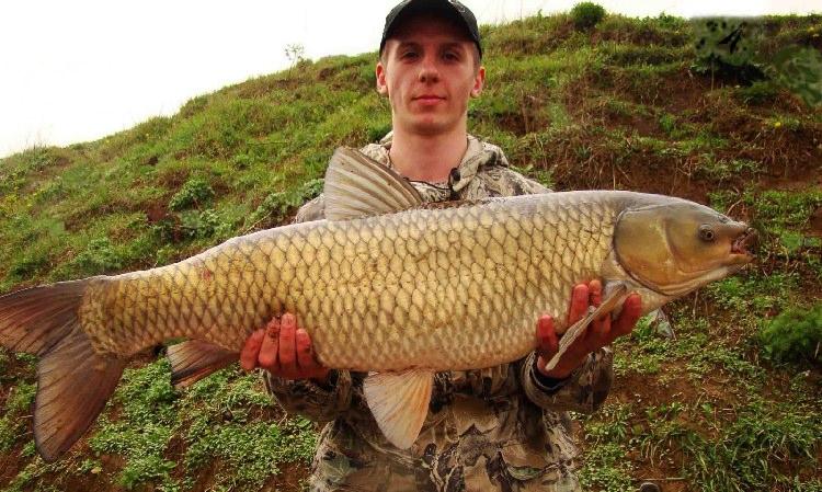 Рыбак с белым амуром в руках