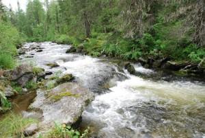 Речка Елма в Северной Карелии