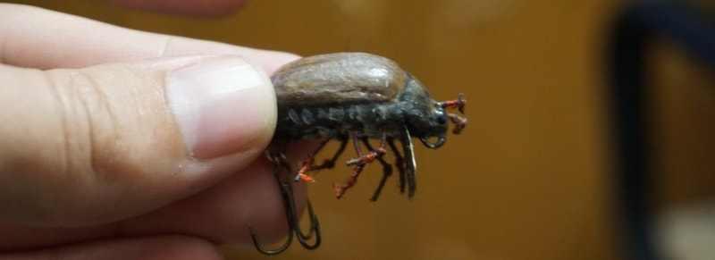 Вид сбоку - у воблера жука видна лопатка