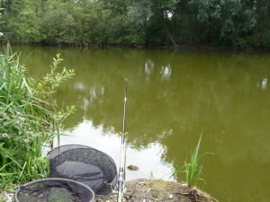 Фидерная ловля линя на пруду