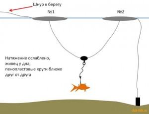 Ловля щуки на живца по воде (весна, лето, осень)
