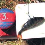 Руководство по ловле щуки на живца по открытой воде весной, летом и осенью