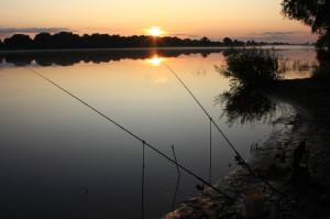 Ловля плотвы на фидер весной, летом и осенью - прикормка, приманки, оснастка, техника ловли