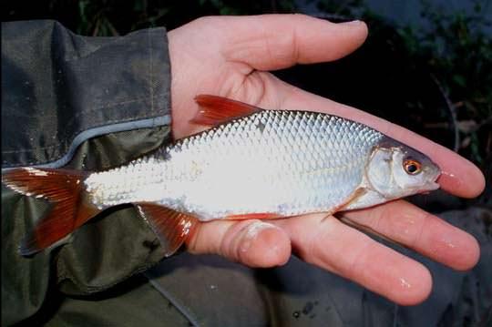 Ловля на поплавочную удочку  Рыбалка на поплавок весной летом и осенью