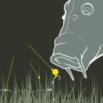 Ловля карпа на бойлы - 5 рецептов и руководство по правильной оснастке удилища
