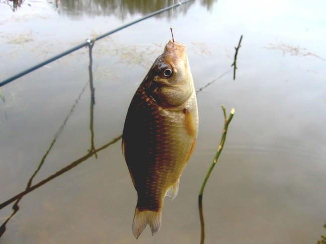 Какой размер крючка на карася — Здесь рыба