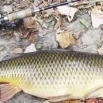 Фидерная ловля сазана - снасти, прикормка и техника ловли
