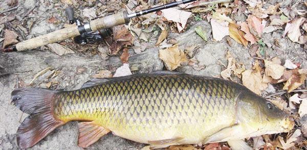 Оснастка для ловли на течении сазана