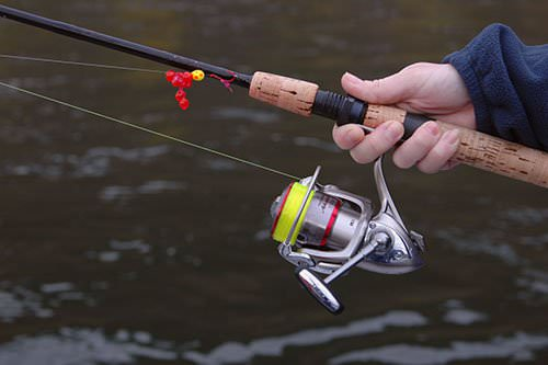 Как поймать сазана самого крупного на спиннинг удочку фидер и где поймать