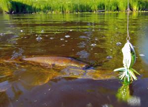 Лягушка-незацепляйка в речном пруду