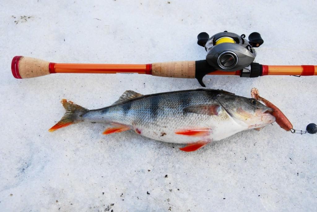 Пойманная рыба и кастинговое удилище на снегу