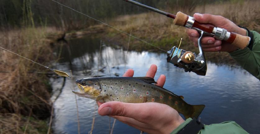 Рыба пойманная на спиннинг