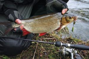 Рыбак поймал язя