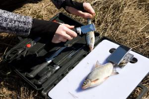 Набор для разделки рыбы