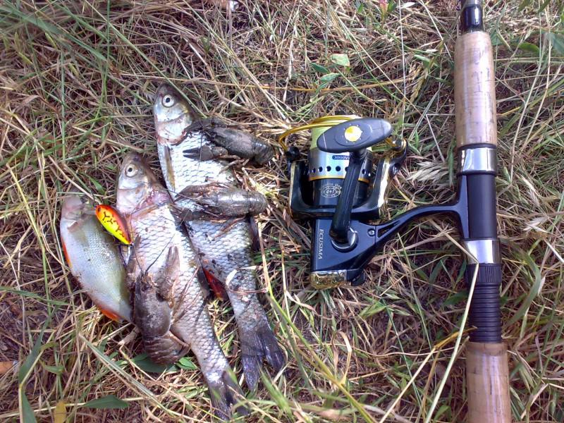 Пойманная рыба на воблер Понтоон21