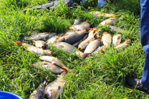 Рыба, пойманная на Сенежском озере