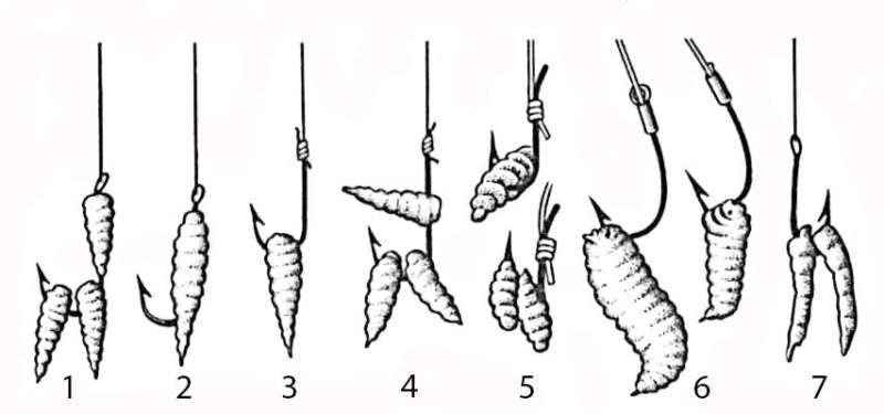 Схема насаживания опарышей на крючок